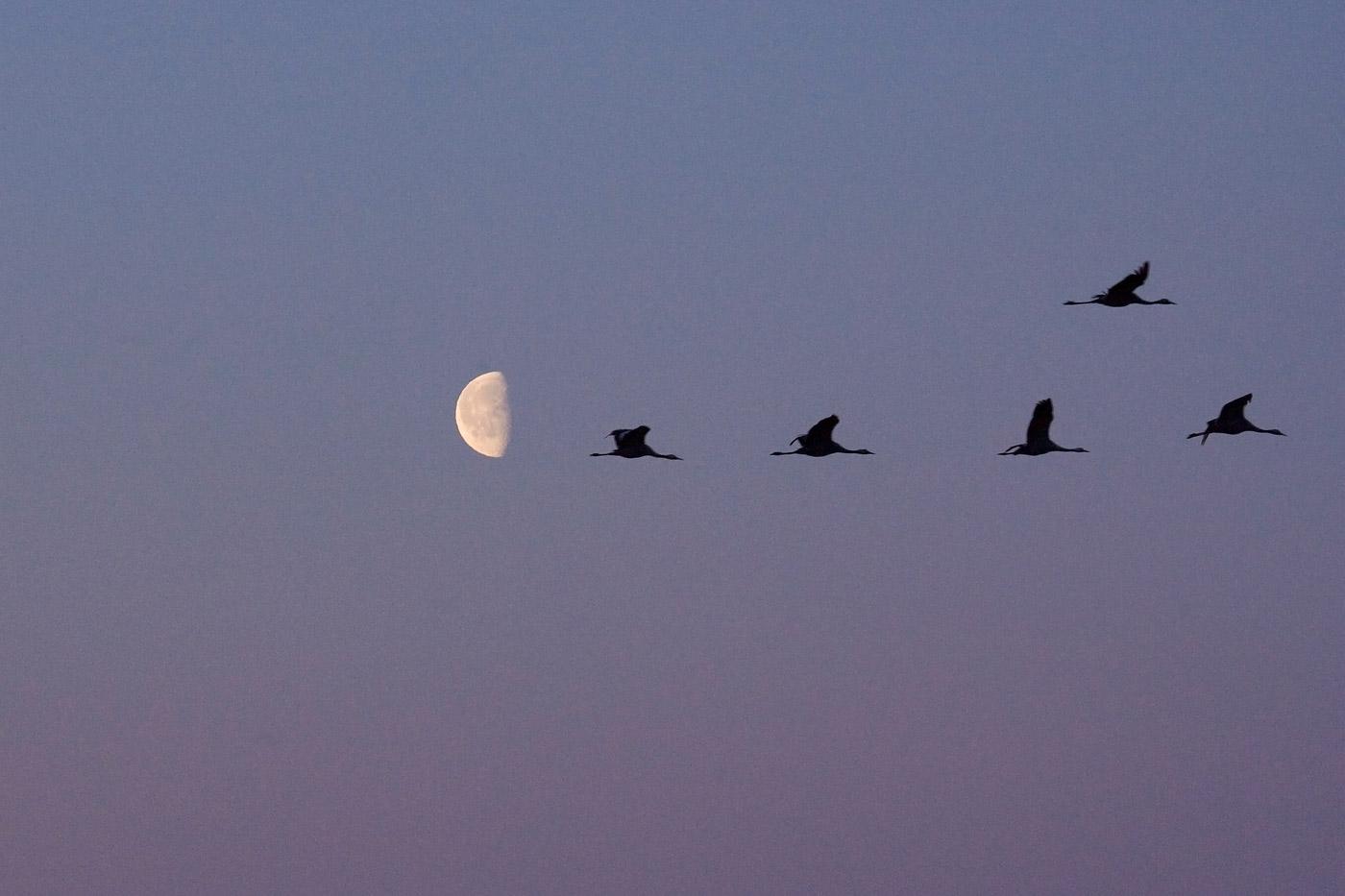 cranes-1
