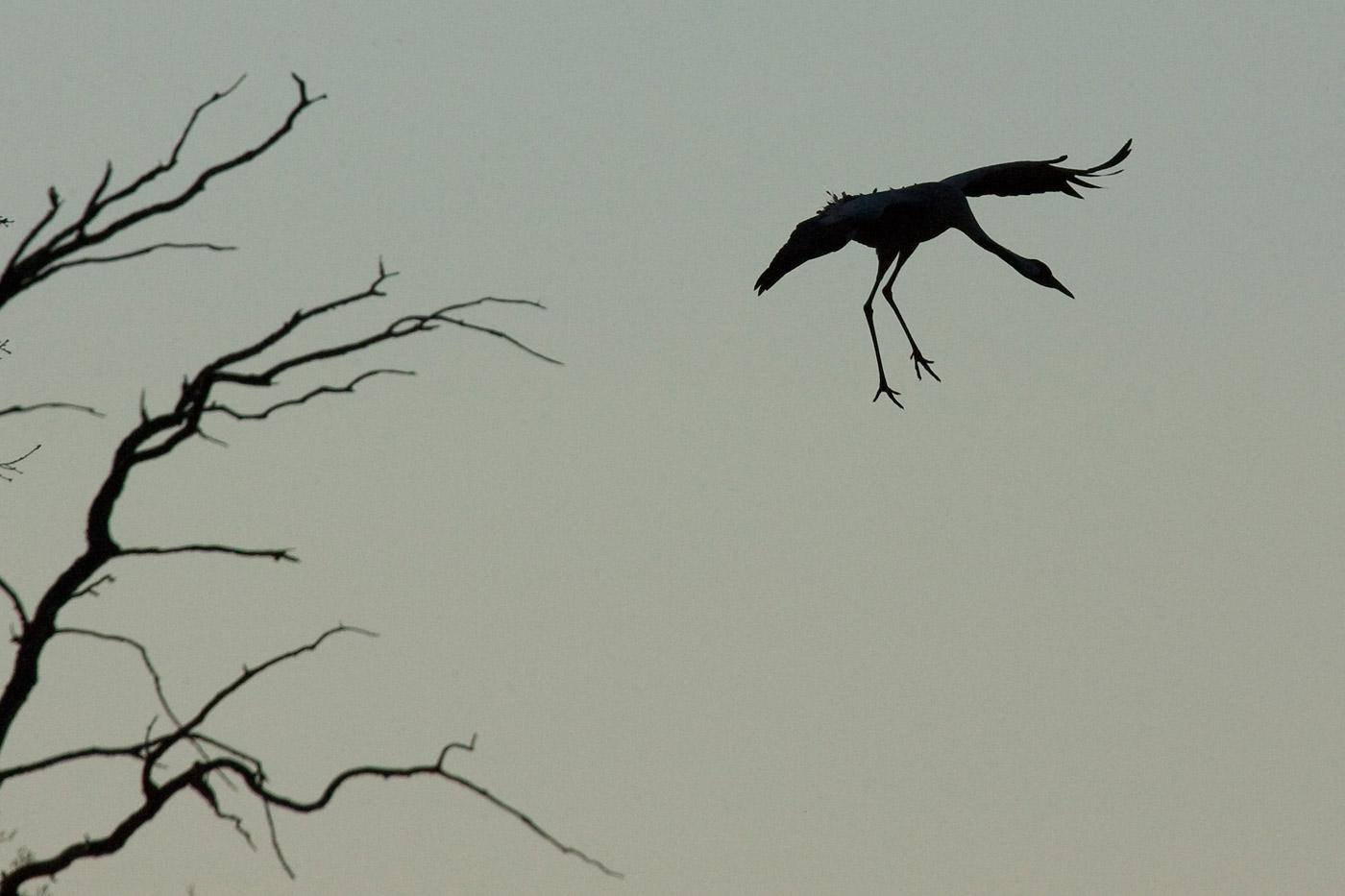 cranes-13
