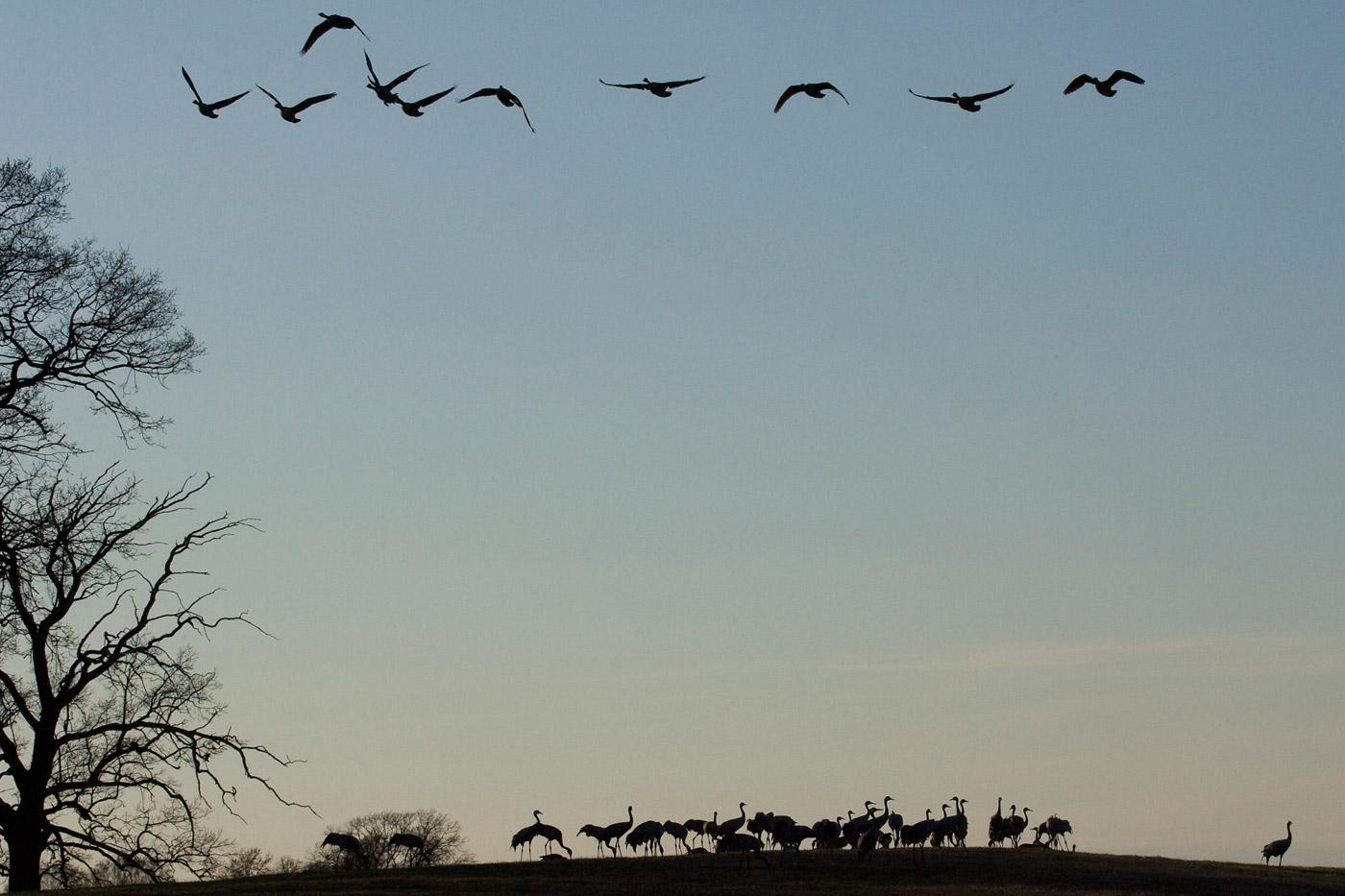 cranes-14