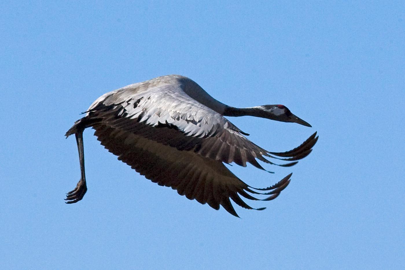 cranes-15