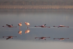 flamingos-1_0