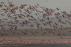 flamingos-3