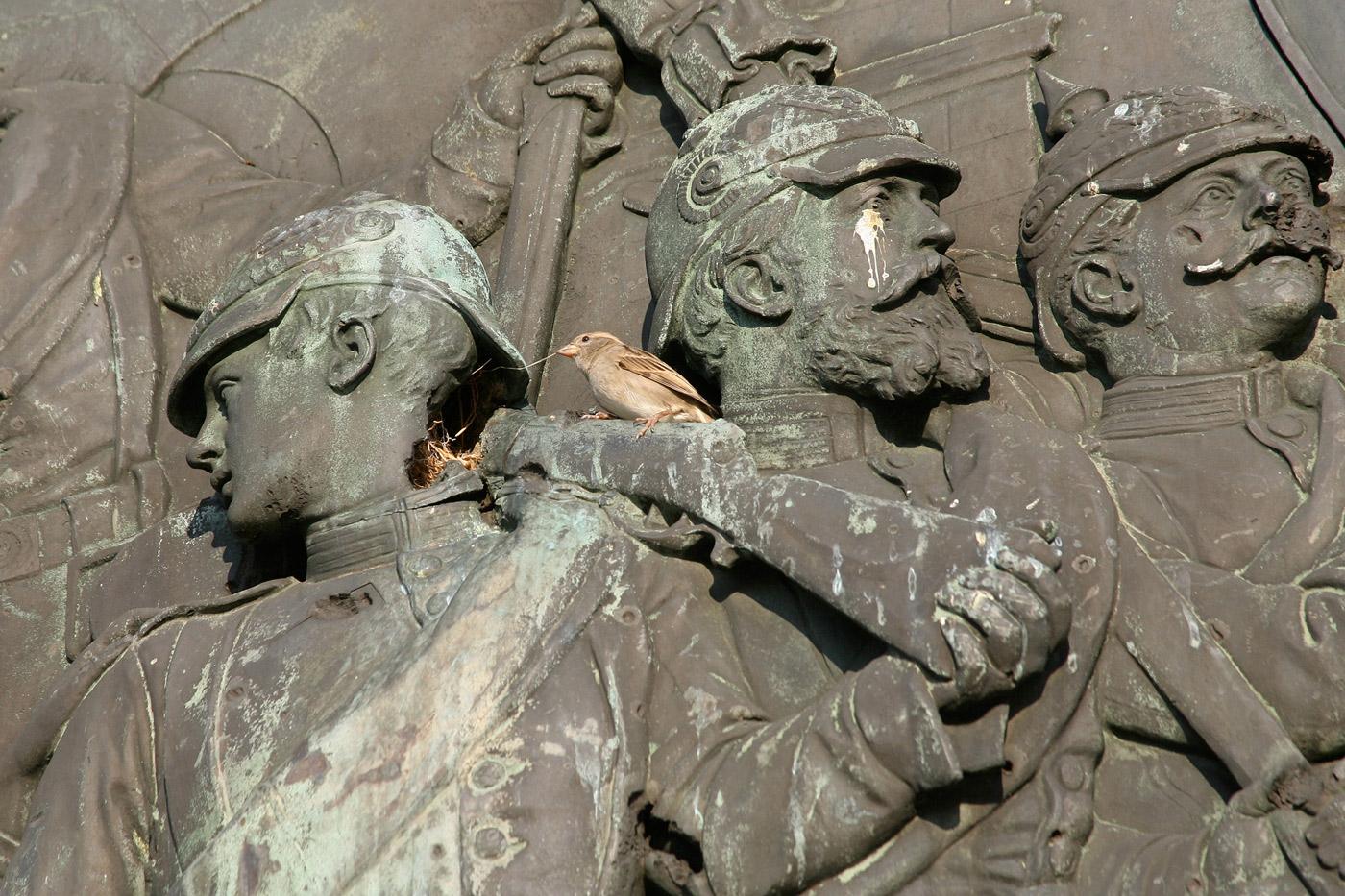 bird-nesting-siegessaule-berlin