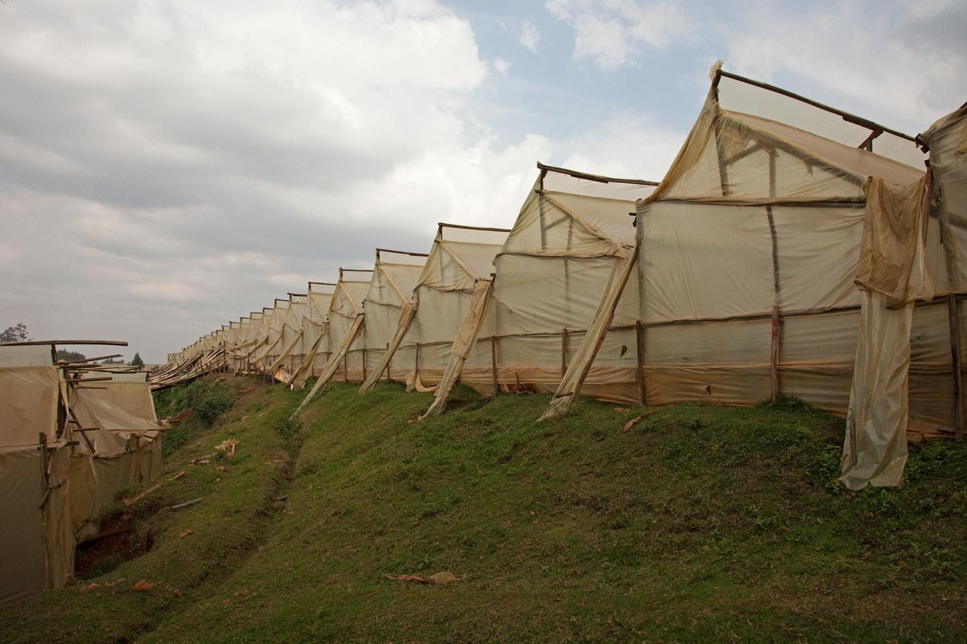 green-houses-kenya-2