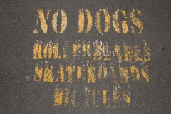 no-dogs-new-zealand