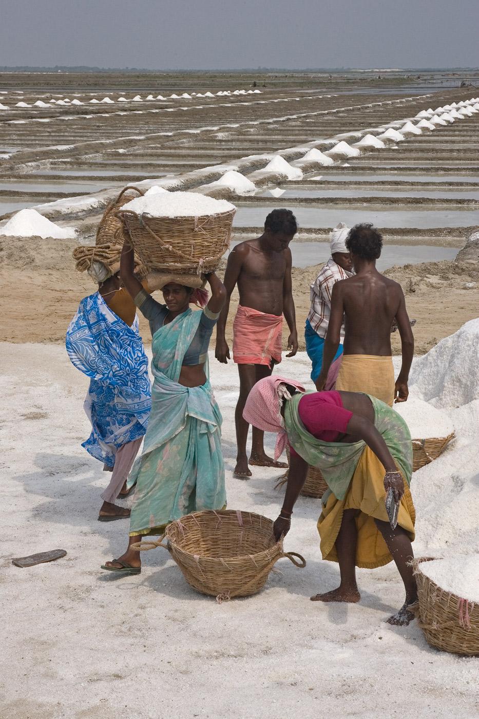 salt-india