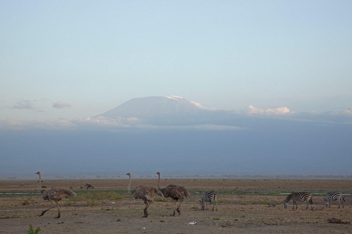 amboseli-and-kilimanjaro