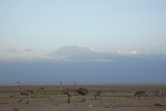 amboseli-and-kilimanjaro