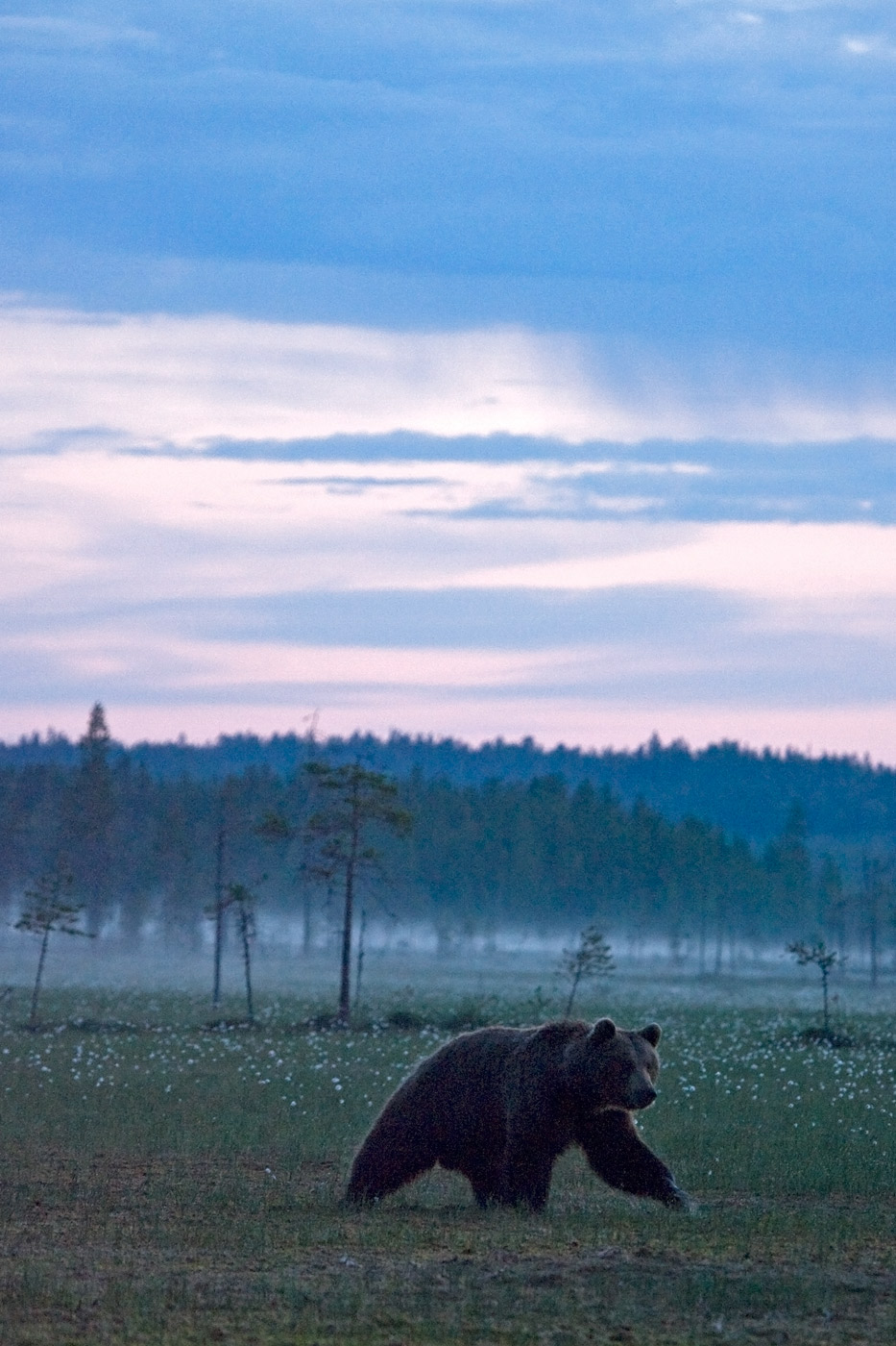 brown-bear-1
