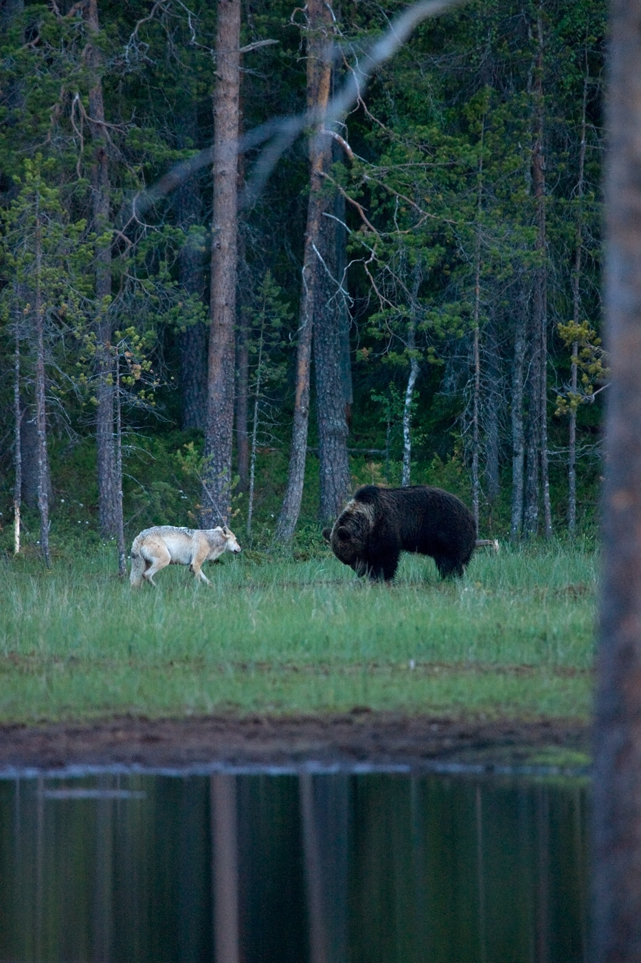 brown-bear-and-wolf