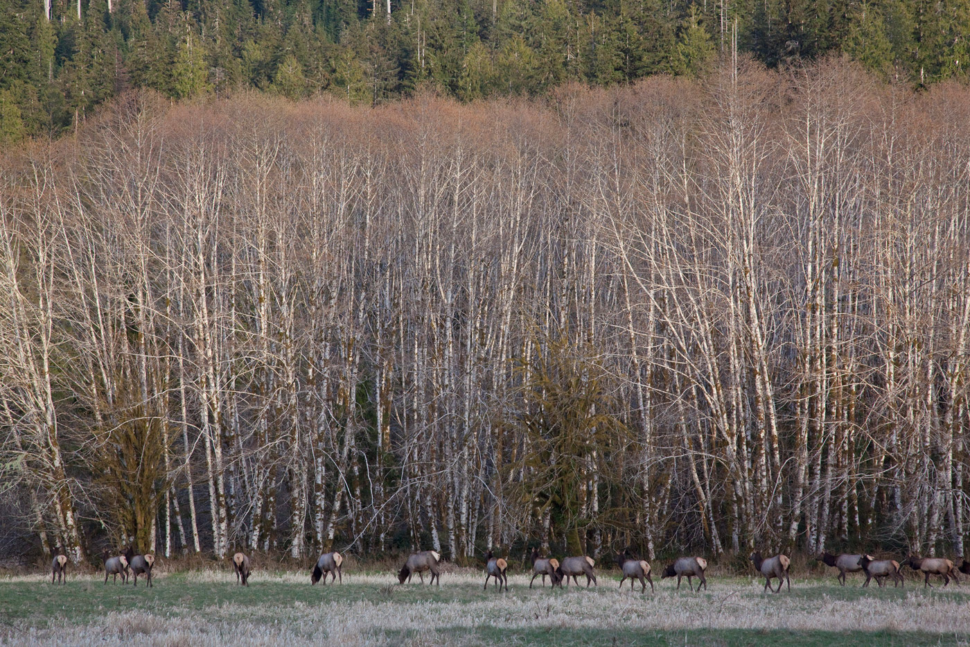 elks-state-of-washington