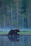 brown-bear-4