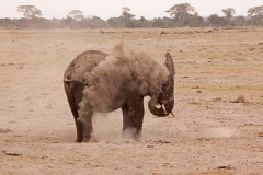 elephant-dust-washing